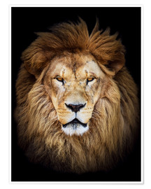 Poster  King of the Jungle Portrait
