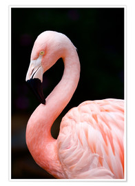 Premiumposter  Pink Flamingo