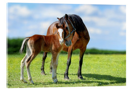Akrylglastavla  Mother Love - mare with foal
