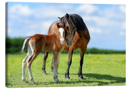 Canvastavla  Mother Love - mare with foal