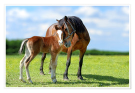 Premiumposter  Mother Love - mare with foal