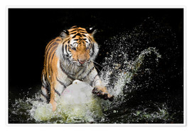Premiumposter  Tiger Makes the water