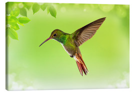 Canvastavla  hummingbird