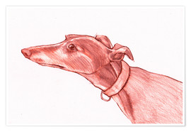 Premiumposter Greyhound pencil drawing white and red colour pencil sketch