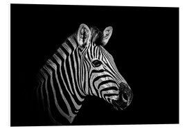 PVC-tavla  Zebra - close up