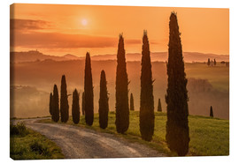 Canvastavla  Golden Morning - Tuscany - Achim Thomae