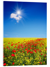 Akrylglastavla  Sunny landscape with flowers in a field