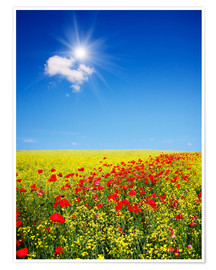 Premiumposter  Sunny landscape with flowers in a field