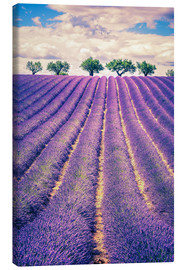 Canvastavla  Lavender field with trees in Provence, France