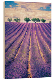 Trätavla  Lavender field with trees in Provence, France