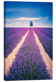 Canvastavla  Lavender field with tree in Provence, France