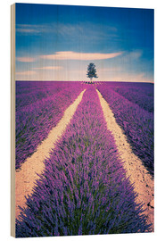Trätavla  Lavender field with tree in Provence, France