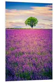 PVC-tavla  Lavender field with tree in Provence, France