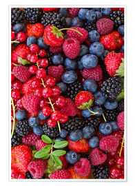 Poster  colorful berries