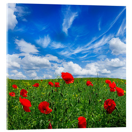 Akrylglastavla  Red poppies on green field
