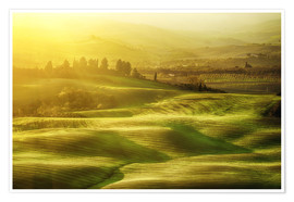 Premiumposter Wavy fields in Tuscany, Italy