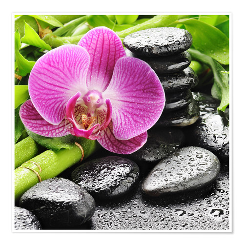 Poster Zen stones and pink orchid
