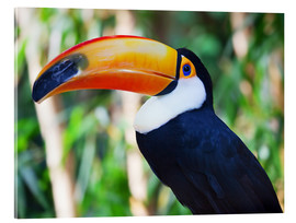 Akrylglastavla  Giant toucan in Brazil