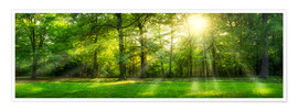 Poster  Forest panorama in summer - Jan Christopher Becke