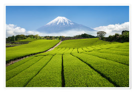 Premiumposter  Tea field in Japan with Mount Fuji - Jan Christopher Becke