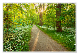 Premiumposter  Wild Garlic Forest - Dave Derbis