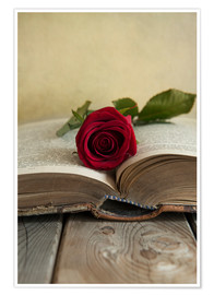 Poster Red rose and old open book