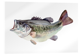 Akrylglastavla  Bass fish painting - Verbrugge Watercolor