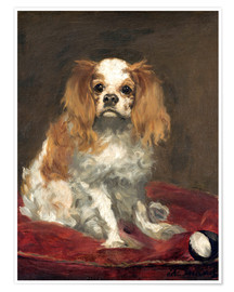 Poster A King Charles Spaniel