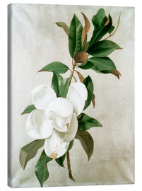 Canvastavla  magnolia - Adolf Senff
