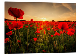 Akrylglastavla  Poppy field with sunset - Oliver Henze
