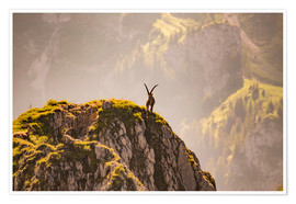 Premiumposter  Capricorn in the Alps - Michael Helmer