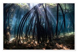 Premiumposter Beams of sunlight in a mangrove forest