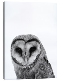 Canvastavla  The owls are not what they seem - Finlay and Noa