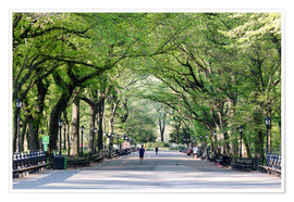 Premiumposter  The Mall in spring, Central park, New York city, USA - Matteo Colombo