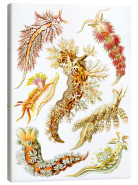 Canvastavla  Nudibranches - Ernst Haeckel