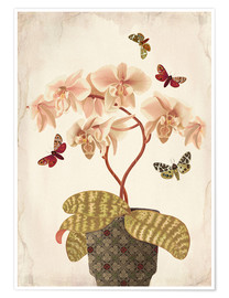 Poster  Orchid Portrait - Mandy Reinmuth