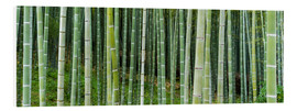 PVC-tavla  Green bamboo forest in Kyoto, Japan - Jan Christopher Becke