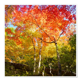 Poster Bright colors in the autumn forest