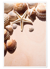 Poster  Starfish and shells