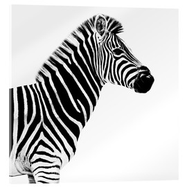 Akrylglastavla  Zebra on white - Philippe HUGONNARD