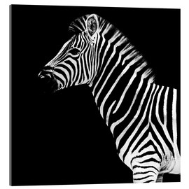 Akrylglastavla  Zebra on black - Philippe HUGONNARD
