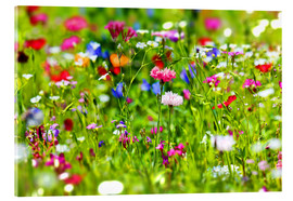 Akrylglastavla  Flower meadow - fotoping