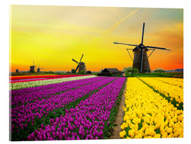 Akrylglastavla  Dutch windmills and fields of tulips