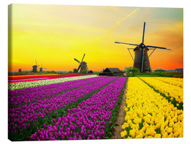 Canvastavla  Dutch windmills and fields of tulips