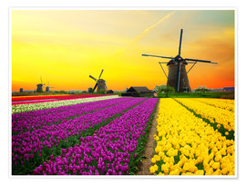Premiumposter  Dutch windmills and fields of tulips