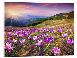 Akrylglastavla  Crocuses and the sun in spring