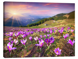 Canvastavla  Crocuses and the sun in spring
