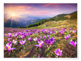 Premiumposter  Crocuses and the sun in spring