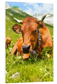 PVC-tavla  Cow with bell on mountain pasture