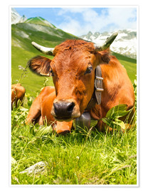 Premiumposter Cow with bell on mountain pasture